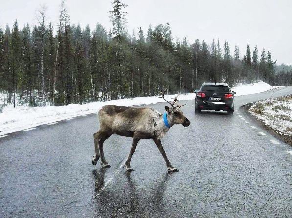 В Финляндии можно передвигаться на шипованной резине только с определенного момента, установленного законом
