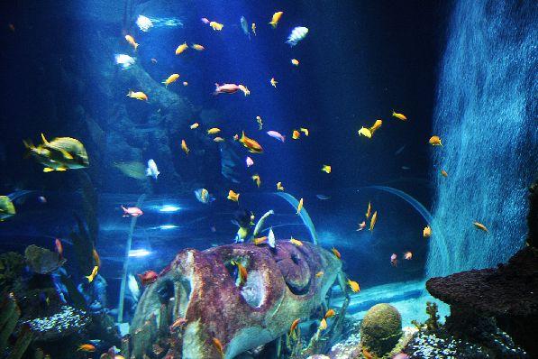 Если Вы соскучились по ярким краскам, то Вам в океанариум Sea Life!