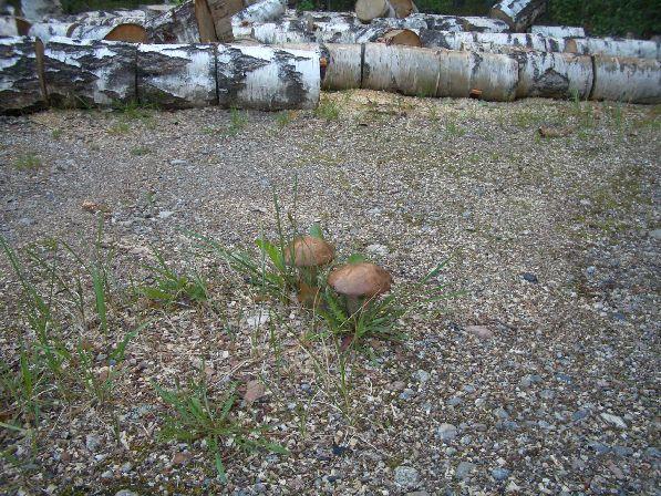 При благоприятной погоде и в октябре можно отправиться на поиски грибов, которых, правда, иногда можно встретить и в совсем неожиданных местах