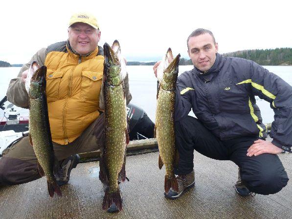 А вот таких щук в октябре ловят на озере Сайма!