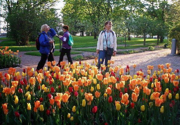 В апреле Финляндия снимает белоснежное пуховое одеяло и покрывается пёстрым цветочным ковром.