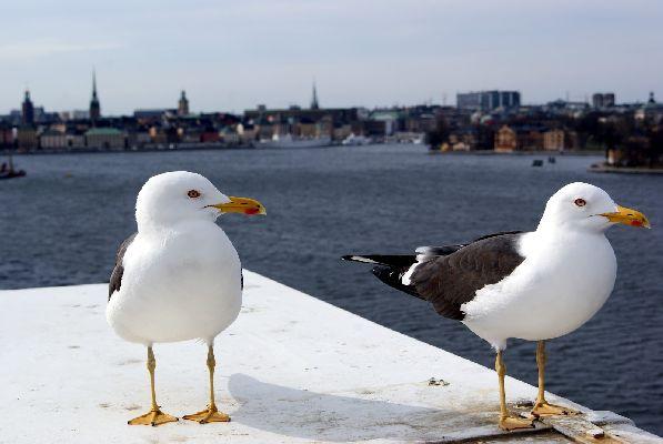 В апреле в южные регионы Финляндии приходит заметное потепление, в то время как на севере ещё лежит снег, и продолжается горнолыжный сезон.