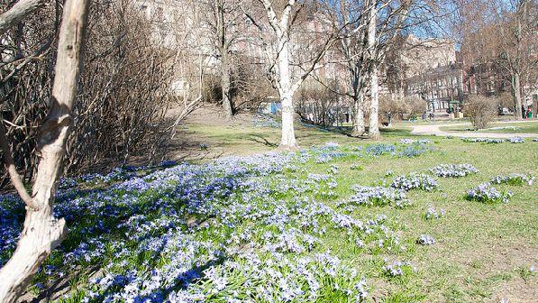 В один из апрельских дней в городском парке.