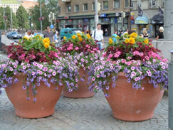 Цветы в вазона, цветы в клумбах, цветы на газонах - они повсюду!