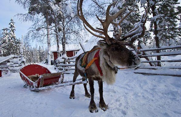 Прекрасным дополнением к отдыху могут стать традиционные зимние финские забавы.
