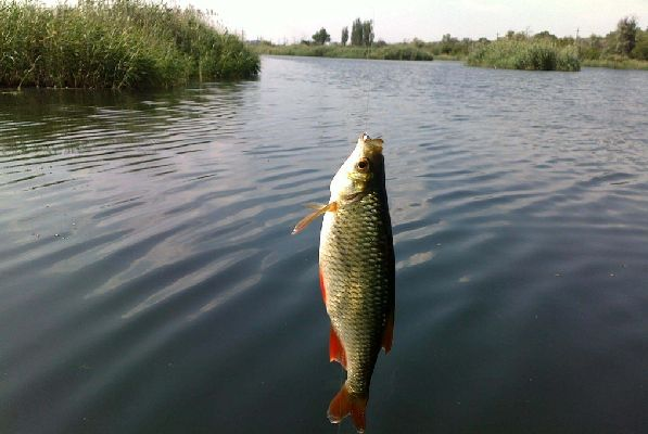 Аланды - истинный рай для заядлых рыболовов.