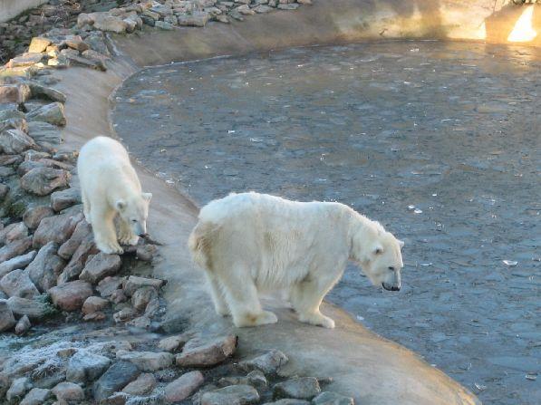 Это самый северный зоопарк мира!