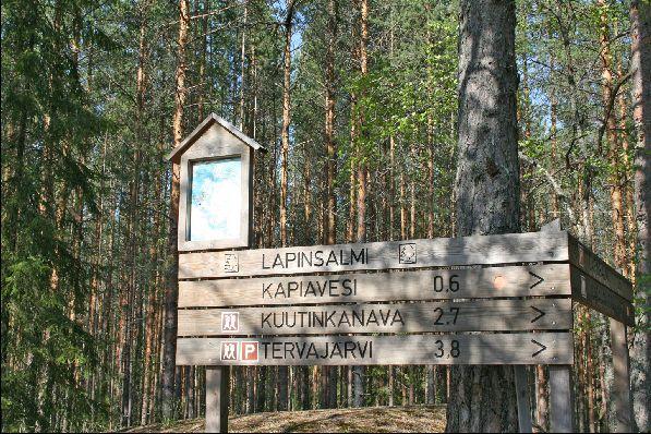 Треккинг в лесу - отличный способ укрепить здоровье и побыть наедине с природой, но для этих целей лучше воспользоваться услугами профессионального гида.